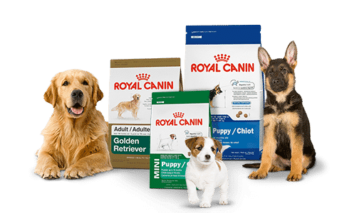 Royal Canin,Drools,choostix Dog food buy online free fast delivery all over India