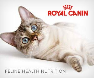 Royal Canin Kitten and Cat food
