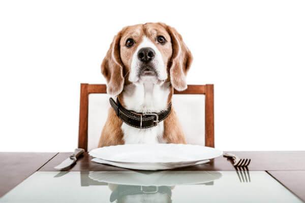 dog food options(veg/non-veg