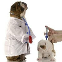 Pet Supplements & Medicines